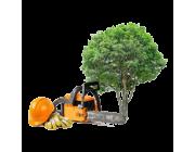 Обрезка и спиливание деревьев в Ярославле